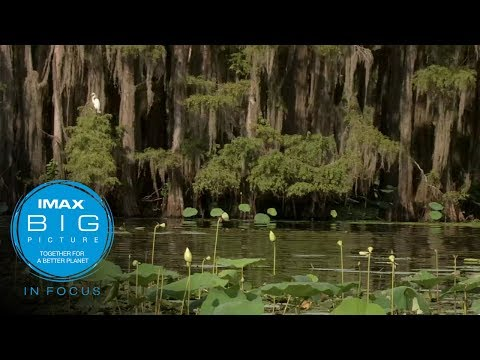 IMAX In Focus: Beyond the River of Grass Documentary (short)