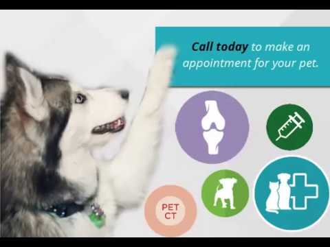 Pet Wellness Testing and Exams
