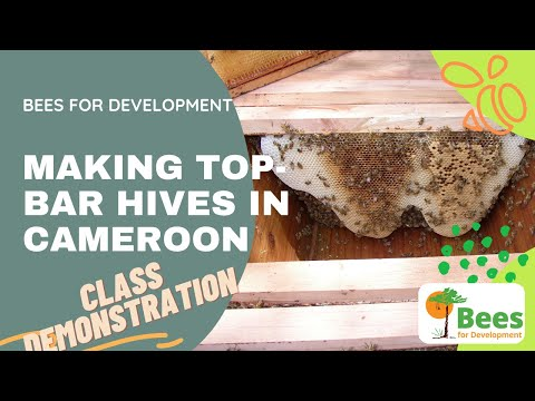 Bees and Trees Project in Nkor, Cameroon - Making A Top Bar Hive
