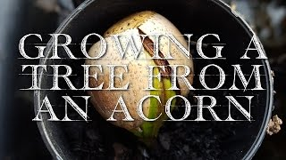 Growing a Tree from an Acorn