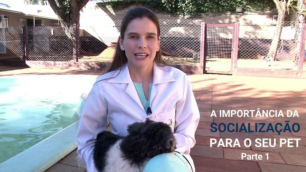 A Importância Da Socialização Para Seu Pet