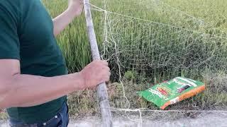 Cách căng lưới bẫy chim đêm nhanh chóng.hiệu quả.cung cấp phụ kiện bẫy chim đêm