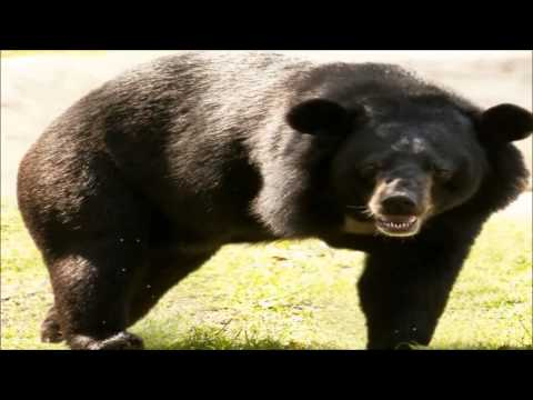 Listen to Bouncer the Bear's message from the project - Oceans 2 Earth