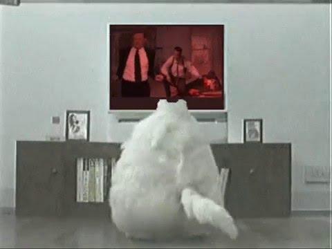 Fat Cat Dancing - YouTube