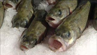 Realer Irrsinn: Meeresfischzucht im Saarland