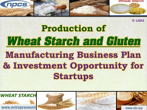 Production of Wheat Starch and Gluten