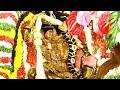మోహిని అవతారంలో జగన్మోహన స్వరూపిణి వైభవం | శ్రీ పద్మావతీ అమ్మవారి బ్రహ్మోత్సవాలు 2020 | Bhakthi TV