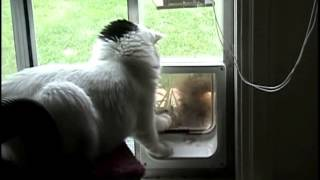 "Squirrel tries to get in cat door, cat says ""no!"" Mary Cummins, Animal Advocates"
