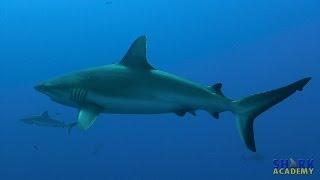 Shark Academy1