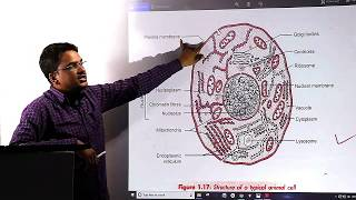 class 8 biology cell-structure and functions || parts of cell  || part 3