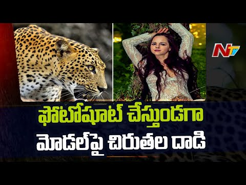 36-yr-old model seriously injured after leopards attacked her during photoshoot
