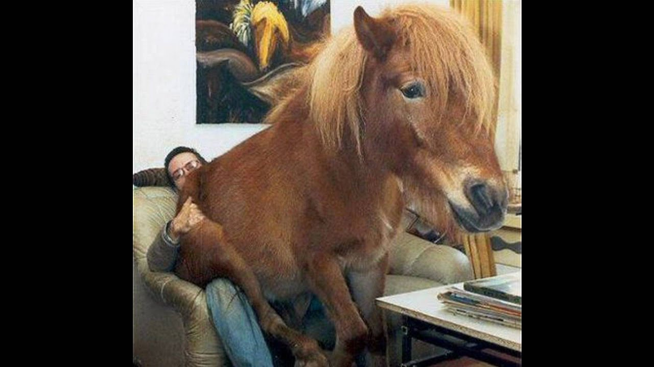 World S Funniest And Cutest Horses Youtube