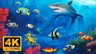 Beautiful CORAL Reef FISH, Relaxing Ocean Fish, & Stunning Aquarium