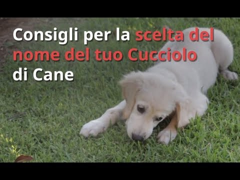Nomi Per Cani 1000 Idee Per Scegliere Il Nome Del Cane