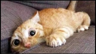 Top 200 Highlights FUNNY ANIMALS COMPILATION