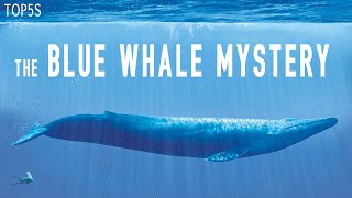 5 Most Mysterious & Unexplained Oceanic Mysteries
