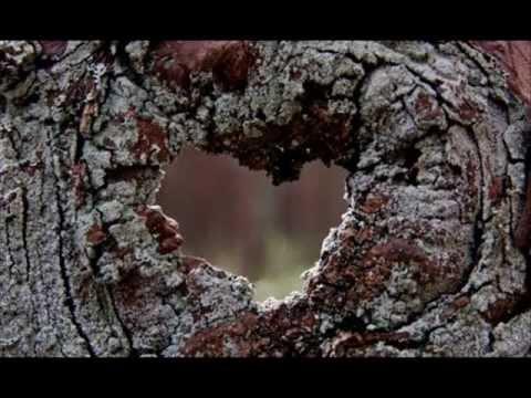 Tania Libertad - Corazón de Madera -