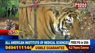 Special story on K4, tiger of Komaram Bheem forests..