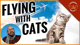 Cat Travel Tips: Airplane Edition