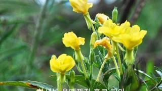 김정호 - 달맞이꽃.wmv