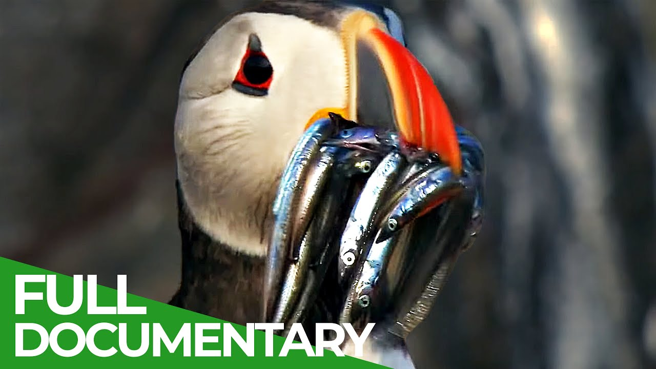 Wildlife Moments - The Funniest Animal Encounters | Part 1 | Free Documentary Nature