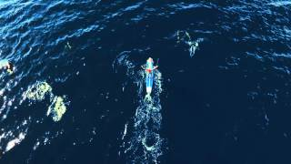 Zane Schweitzer Paddling with Dozens of Dolphins  in Oahu, Hawaii