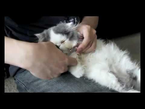 Nega noktiju mačaka