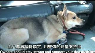 狗狗聽我的 - 如何帶新領養的狗狗回家 上 (How to bring a new dog home part 1)
