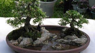 Landscape Bonsai Style (Bonkei)