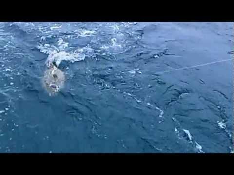 Рыбалка на Кубе. Групер