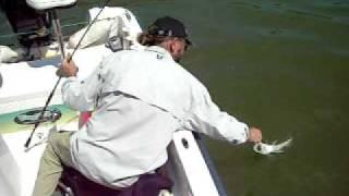 Pesca de Lucioperca al lance