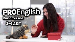 Bingo the dog /// ProEnglish /// 3-4 Age