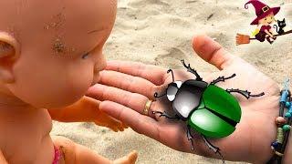 Encontramos a unos Adorables Escarabajos en la Playa