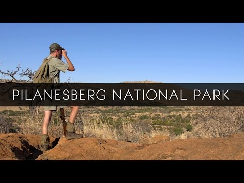 Pilanesberg National Park - South Africa