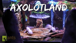 Axolotland - The Cutest Creatures You've Ever Seen