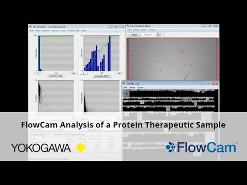 protein therapeutic analysis