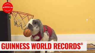 Most Slam Dunks By A Rabbit! | Guinness World Records: Officially Amazing | Universal Kids