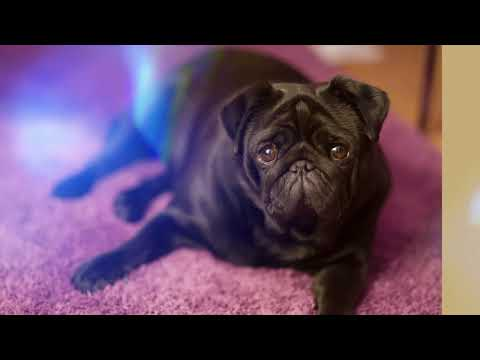 Pet Stain & Odor Removal Services Vancouver WA