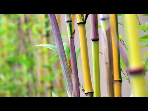 Bamboo Engineering - Massachusetts Institute of Technology (MIT)  - A3OBbGojx_k -