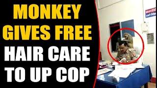 Monkey sits on Cop's Shoulder, gives him free hair care, v..