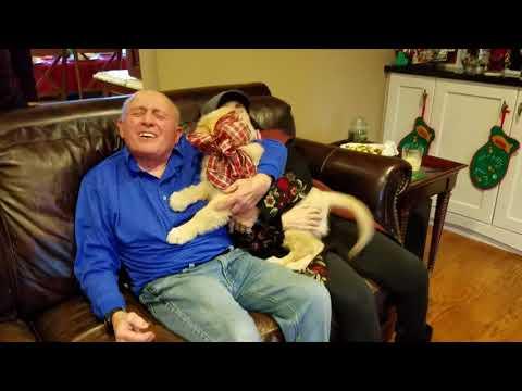 Giving grandma and grandpa a puppy!