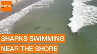 Multiple Sharks Swim Close to Myrtle Beach Shore (Storyful, Crazy)