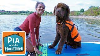 Ein Tag beim Hundeschwimmen | Information für Kinder | Pia und die Haustiere