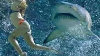 鮫スライドショー2
