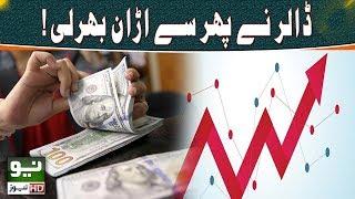US dollar rises again | Neo News