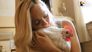 Rescue Chicken Loves Her New Family