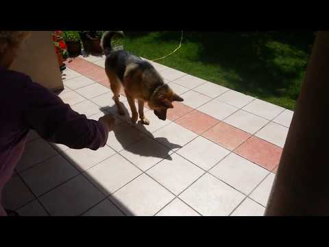 Dog Attacks His Own Shadow