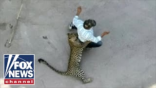 WILD video: Leopard attacks residents in Indian city