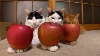 のせ猫総集編