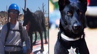 Cop Ambushed In Woods, But K9 Partner Saves His Life